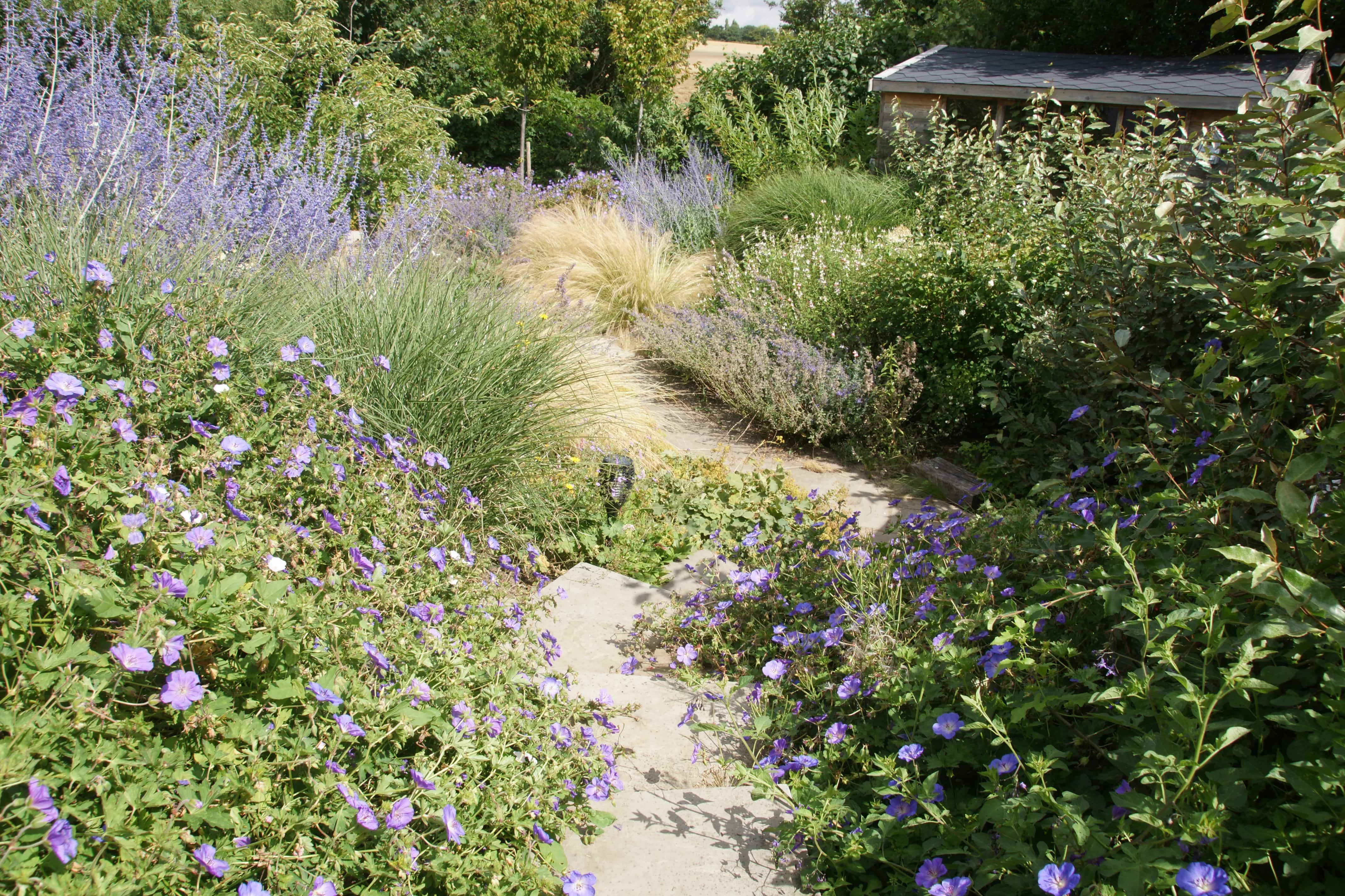 Perennial grass planting